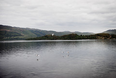 (kirsten alison) Tags: mountains reflection birds scotland lochlomond