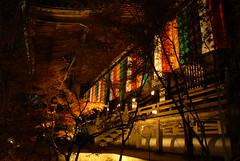 Kyoto Autumn leaves Japan night shot (Mal B) Tags: autumn leaves japan landscape japanese kyoto temples   nippon nihon  httpmalbuktumblrcom