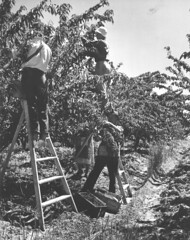 00020 (history nut1) Tags: fern tree gully ferntree scoresby