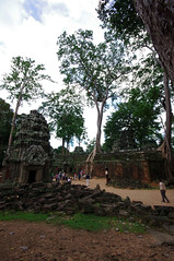 The towering are done by the Trees here (chillveers15) Tags: trees ancient ruins cambodia pentax sigma jungle 1020mm angkor wat ta carvings prohm etchings kx aspara