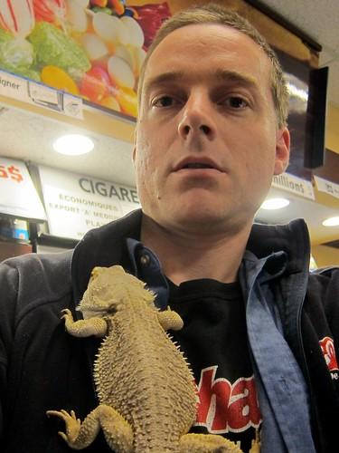 pet dragon reptile pogona lézard