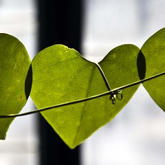 La nature de l'amour (gherm) Tags: paris france green leaves canon heart coeur vert greenhouse glasshouse feuilles serre auteuil gherm formatcarr eos5dmarkii gettyartistpicks 1109305240