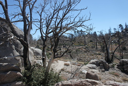 hiking the hanna flat trail - big bear lake