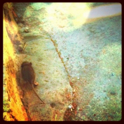"Un ratoncico en la city!!! Será como ""ratatouille""?? by rutroncal"