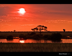End of Day (Steve Rosset) Tags: africa park travel sunset red orange sun silhouette river landscape geotagged glow outdoor african may adventure safari exotic national glowing botswana plains geo magical chobe 2011 steverosset visipix geoafrica