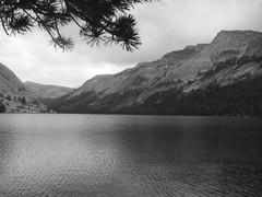 Tenaya Lake (Ale Vignoni) Tags: ale vignoni sonyt200