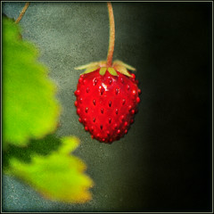last berry . . . (dragonflydreams88) Tags: shining dragondaggerphoto magicunicornverybest sbfmasterpiece dragonflydreams88