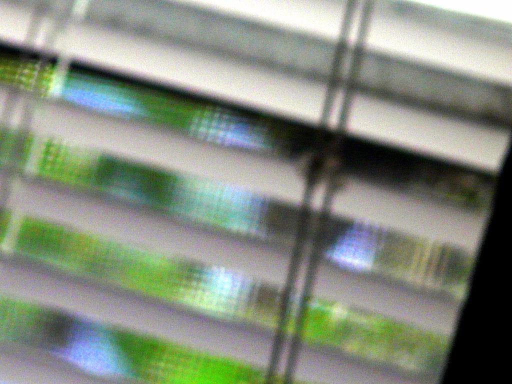 Morning Glory Vines Seen Thru Window Blinds & Screen