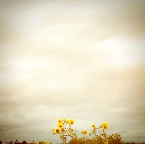 yellow_1948