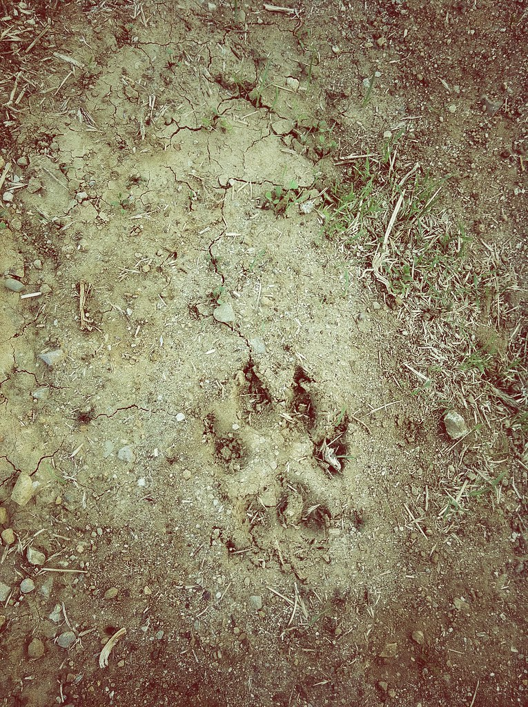 fernie cougar women Local news for fernie, bc continually updated from thousands of sources on the web  4-year-old boy attacked by cougar on family fishing trip near fernie  35 older celeb women who dated much .
