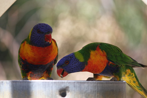Rainbow birdies.