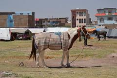 Nawabad 21-08-2100 064 (drs.sarajevo) Tags: afghanistan refugees idps returnees deportees heratcity ferqhaarea