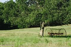 Waiting   256/365 (Danny Buxton) Tags: usa canon landscape rebel nc cleveland ngc pasture 2011 county canon north carolina project xti 365 cleveland hay rake blinkagain 28mm135mm
