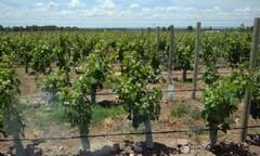 Mendoza: Extranjeros pagan hasta U$S 60 mil por hectárea