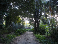DSC02722 (rantavani) Tags: plantas tropicais