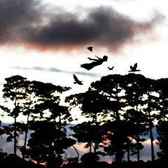 Free as a bird (Juanfer Penagos) Tags: life trees sun black bird me colors birds clouds project freedom fly magic free 365 magical freeasabird juanferpenagos