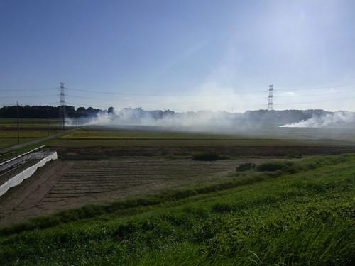 利根運河沿い、藁焼き