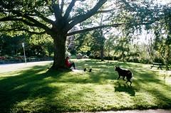 walkinthepark (klausfish) Tags: park dog tree film girl 35mm newfoundland relax stjohns shade portra praktica boweringpark
