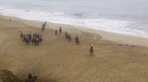 Horses on Half Moon Bay State Beach