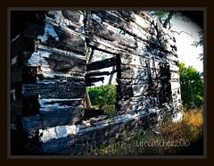 burnt building (lifecatcher2010) Tags: building fire log cabin pasture burnt damage blg charred dscn1128burnt