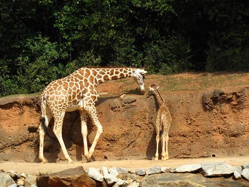 Zoo 0198