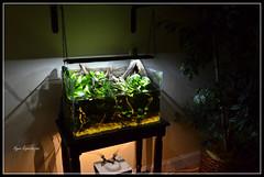 DSC_1356 (EJPNJ) Tags: lighting wood plants fish river aquarium ada design marine aqua tank natural bank bio led driftwood land suspended marineland drift aqaurium amano planted tope biotope riparium