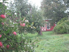 At Hick's Orchard