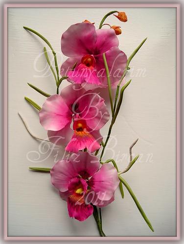 Papilionanthe Orchid-PAPILIONANTHE ORKIDE