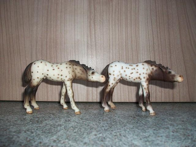 New arrivals in my herd! 6171348573_56d64f91c2_z