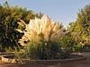 Mi fuente de inspiracion (Micheo) Tags: granada spain residenciademujeres plumeros feathers fuente jardin visita residencia