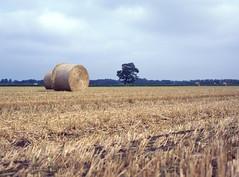 img-008 (Ernst-Jan de Vries) Tags: straw bale landscape analogue mamiya provia 120 mediumformat ernstjandevries provia100f