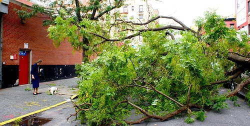 Tree down on E. 6th St.