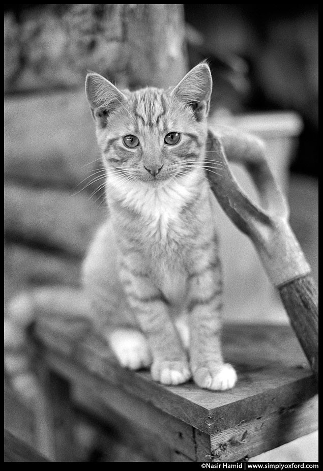 Kitten standing next to a shovel