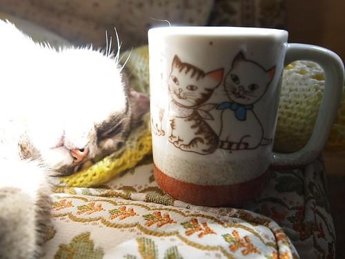 kitten mug + a kitty