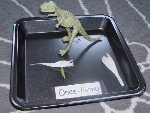 Once-Living Tray (Photo from Kingdom of the Pink Princesses)