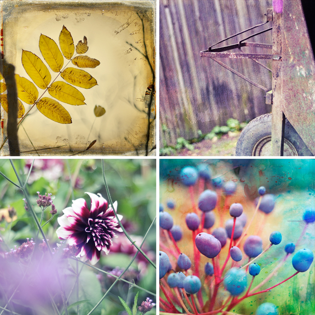 Botaniska collage
