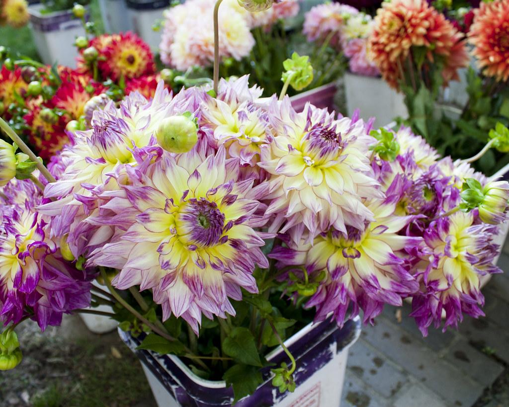 Flowers at Farmer's Market by .imelda, on Flickr