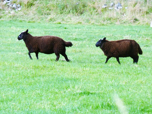 Black Sheep, Glen Fincastle