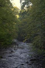 Deep Creek Fly Fishers