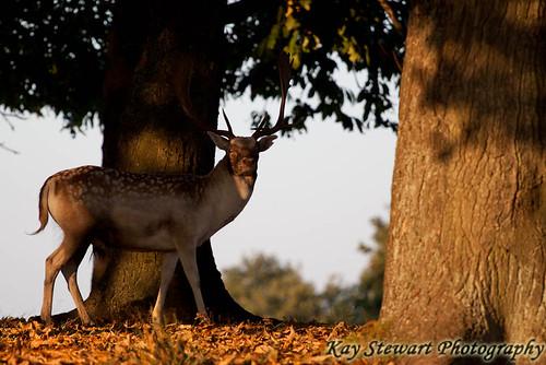 IMAGE: http://farm7.static.flickr.com/6171/6206812526_314aec661f.jpg