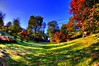 Virginia Waters Garden (Muzammil (Moz)) Tags: uk london fall moz savillegardens colorfulleaves virginiawaters canon60d muzammilhussain autumn2011 sevilegardens