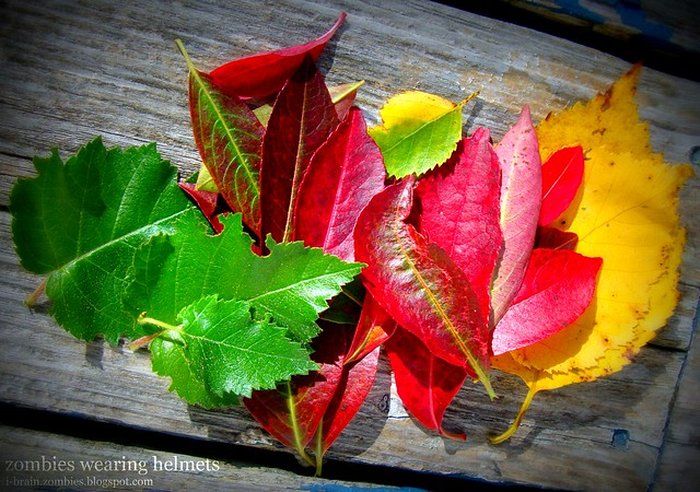 brightly colored fall leaves