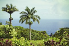 Maui Maui Maui :D (alexl78) Tags: ocean green hawaii maui palm verdant