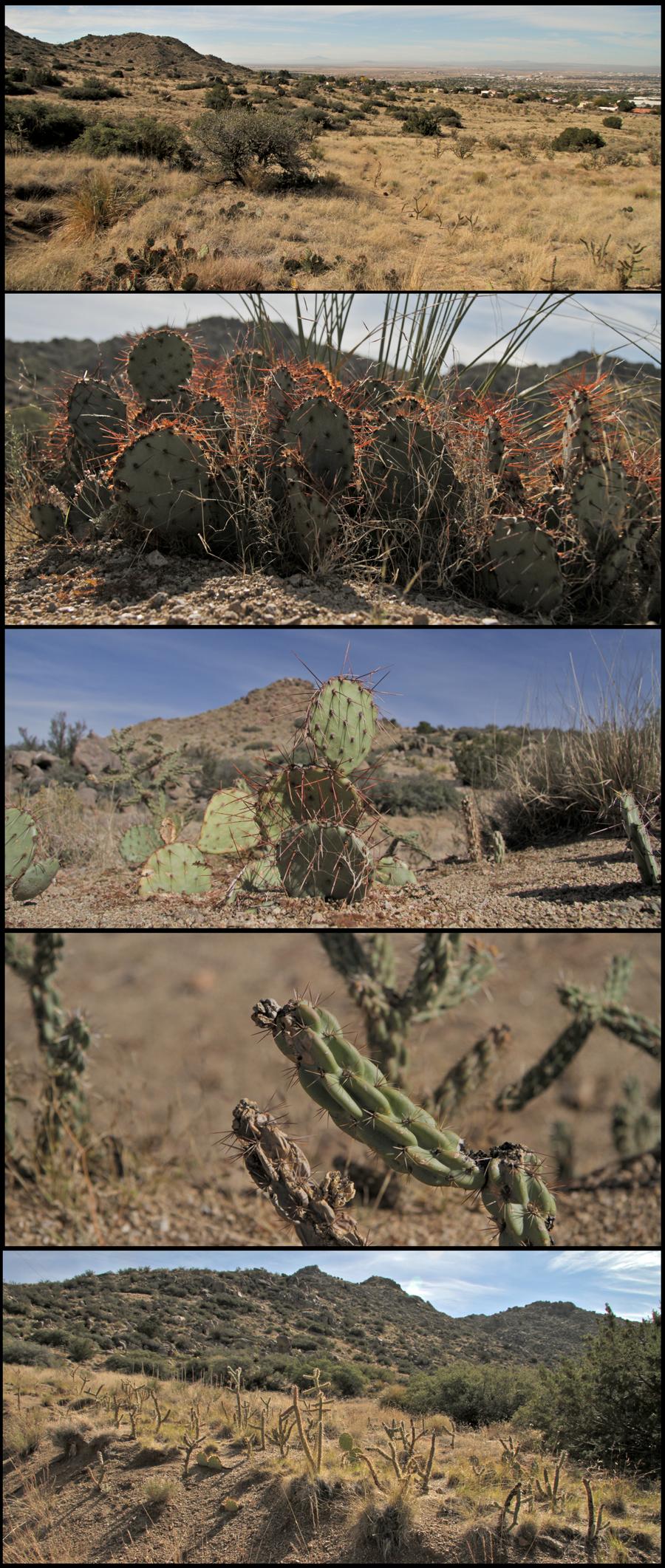 desert_small