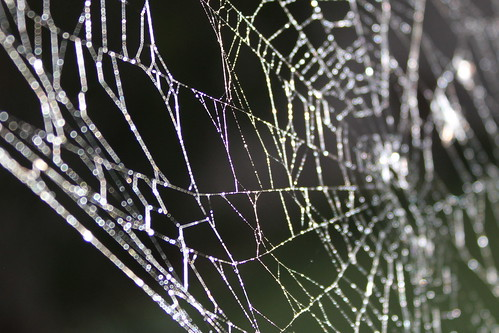 What a Tangled Web It Weaves