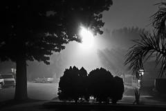 Woodale Ave (Chris Yarzab) Tags: street light tree cars night lights bush shot ave beams woodale chrisyarzab