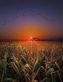 Harvest Migration