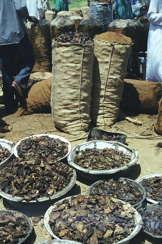 Dried fish in Africa, photo by Chris Bene, 2003