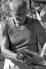 lavoro manuale (the.bestia) Tags: campagna antiquariato semina trattore vigneto forestale frutteto contadino giardinaggio cassone irrigazione forwarder agricolo rimorchi orticoltura agricoltore coltura stoccaggio mietitrebbie rotopresse arboricoltura falciatrici spandiconcime antiquariatoagricolo fieniazione aratrici erpici mietitrici stoppiatori vendemmiatrici esboscatori segaacatena