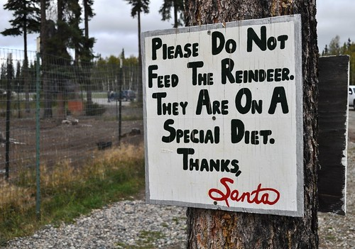 Reindeer on Special Diet, North Pole, Alaska